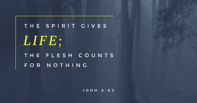 "A picture of a forest with the text ""The spirit gives life; the flesh counts for nothing. John 6:63"""