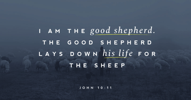 "A picture of sheep with text overtop that reads, ""I am the good shephered. THe good shepherd lays down his life for the sheep"" (John 10:11)."