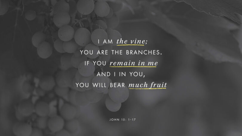 "A picture of grapes with text overtop that reads ""I am the vine; you are the branches. If you remaind in me and I in you, you will bear much fruit."" (John 15:1-17)"
